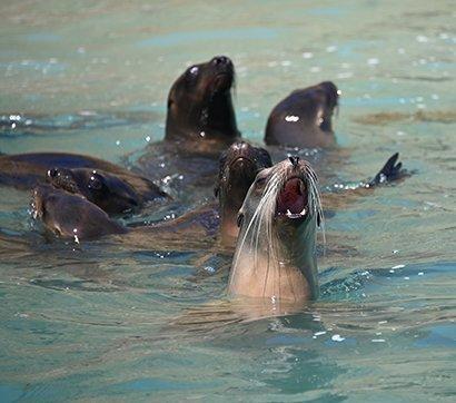marine noise pollution
