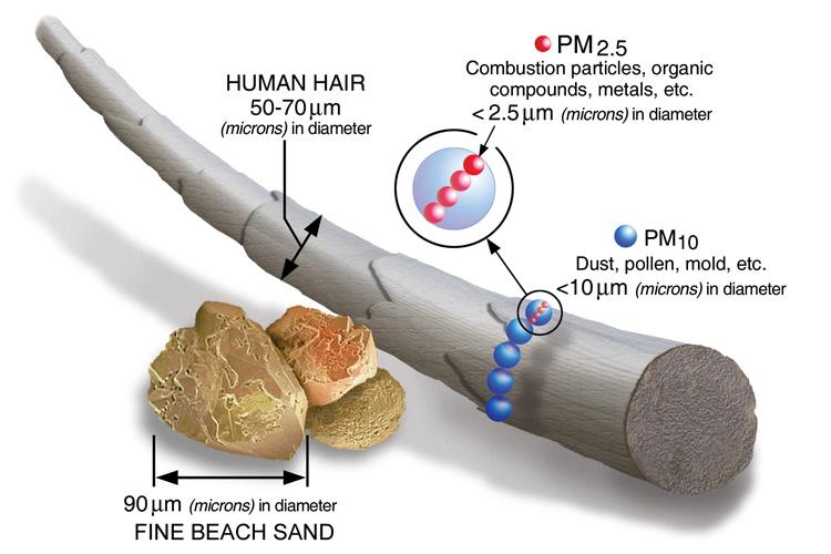 plants major source of LA aerosols